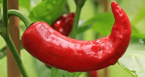 Pimenton Rojo Imagen
