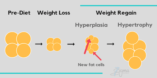 Image showing how cells react when losing weight too fast and gaining it back. (hyperplasia)