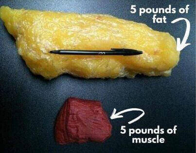Image of 5 pounds of muscle vs. 5 pounds of fat