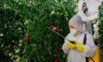 Why Organic Foods Are Not as Healthy as You Think