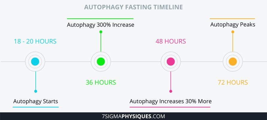 Autophagy Fasting Timeline