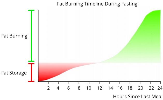 Fat Burning Timeline During Fasting