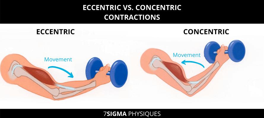 Eccentric vs concentric contractions