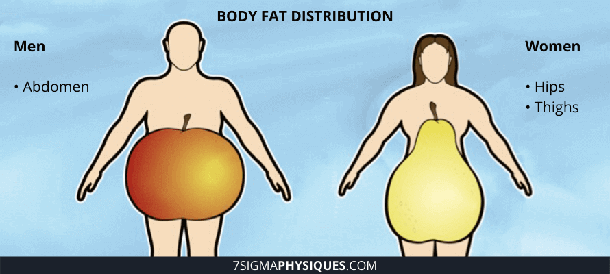 Where is the first place you lose fat in your body? Body fat distribution between men and women.